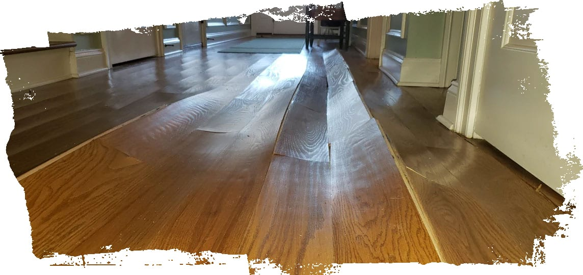 Moisture damaged hardwood floor in need of a dehumidifier