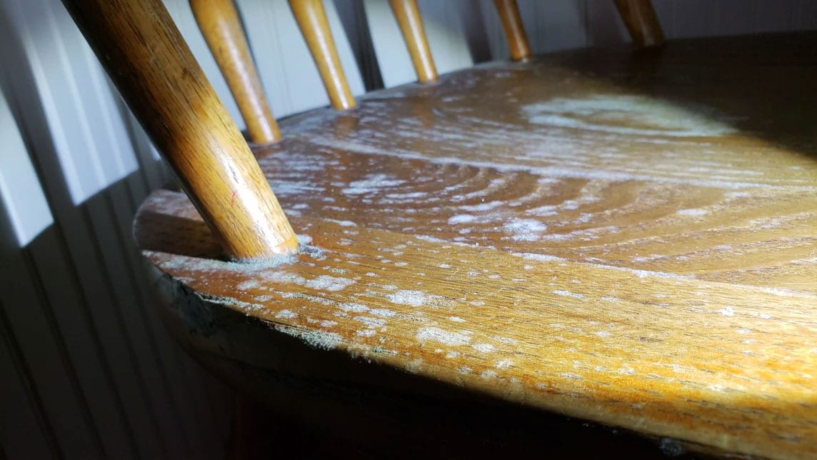 I have surface mold in my home - This is surface mold growing on a chair in the dining room