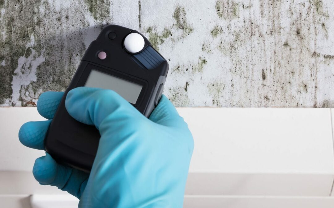 How Does Mold Grow, and What Should You Do When You Find It?